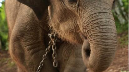 Liquid ivory