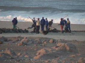 The-Namibian-seal-hunt-has-not-been-well-documented-until-now-1