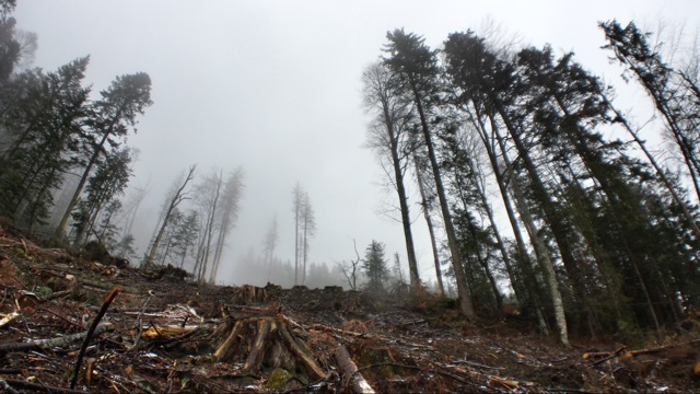 Investigation uncovers 'rampant' illegal logging in Romania