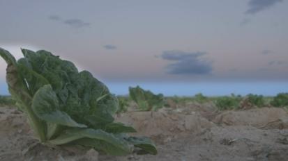 Salad slavery
