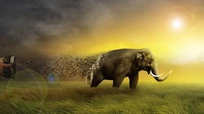 elephantstmactionpage