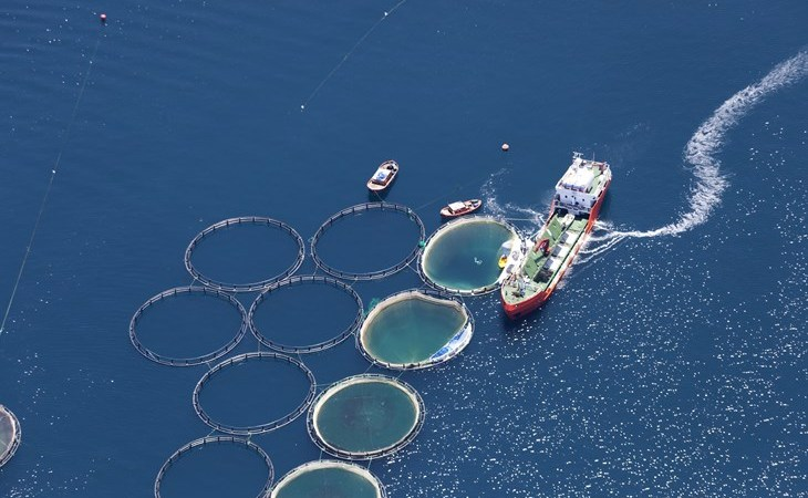 "Uncovering Europe's ""fish feedlots"""